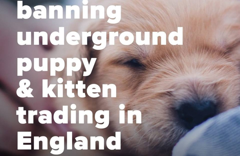 Banning underground puppy and kitten trading Conservatives